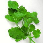 cilantro not rewcommended for lasting longer in bed